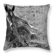 Colt 017 Throw Pillow