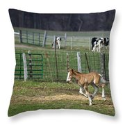 Colt Play With Hay Throw Pillow