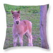 Colt Pony Throw Pillow
