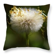 Coltsfoot Bad Hair Day 3 Throw Pillow