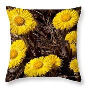 Coltsfoot Ring Throw Pillow