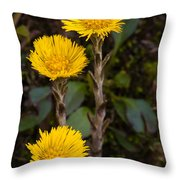 Coltsfoot Trio Throw Pillow