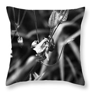 Columbine Flower 2 Black And White Throw Pillow