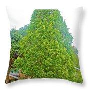 Columnar Oak Along White Pine Trail In Kent County, Michigan  Throw Pillow