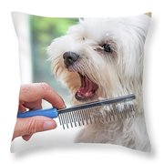 Combing Beards Of The White Dog Throw Pillow