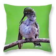 Combing His Feathers - Ruby-throated Hummingbird Throw Pillow
