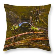 Come Along With Me Dragonflies Throw Pillow