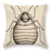 Common Bedbug, Cimex Lectularius Throw Pillow