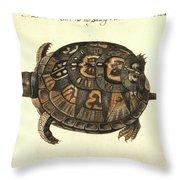 Common Box Tortoise, 1585 Throw Pillow