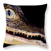 Common Caiman Throw Pillow