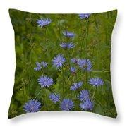 Common Chicory Wildflowers #1 Throw Pillow