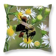 Common Eastern Bumblebee  Throw Pillow