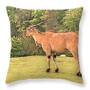 Common Eland Throw Pillow