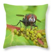 Common Fly Licking Up Aphid Nectar     May         Indiana    Throw Pillow