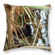 Common Gallinule Throw Pillow
