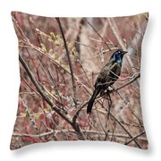 Common Grackle In Spring Throw Pillow