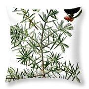 common juniper, Juniperus communis Throw Pillow