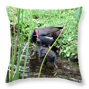 Common Moorhen And Chick Throw Pillow