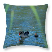 Common Moorhen And Her Baby Throw Pillow