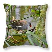 Common Moorhen Throw Pillow