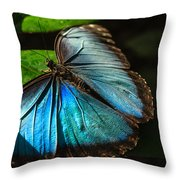 Common Morpho Blue Butterfly Throw Pillow