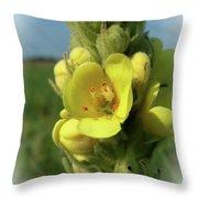 Common Mullein Throw Pillow