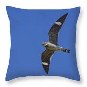 Common Nighthawk Throw Pillow