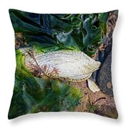 Common Piddock - Pholas Dactylus Throw Pillow