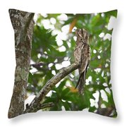 Common Potoo Costa Rica Throw Pillow