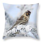 Common Redpoll - Hello Throw Pillow