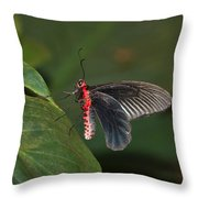 Common Rose Butterfly Throw Pillow