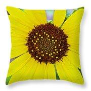 Common Sunflower In Northwest North Dakota Throw Pillow