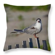 Common Tern Throw Pillow