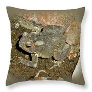 Common Toad - Bufo Americanus Throw Pillow