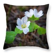 Common Wood Sorrel Throw Pillow
