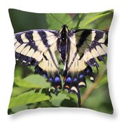 Common Yellow Swallowtail Throw Pillow
