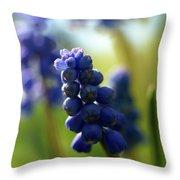 Compact Grape-hyacinth 2 Throw Pillow