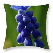 Compact Grape-hyacinth Throw Pillow