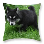 Concern Expressed On The Face Of An Alusky Pup Throw Pillow