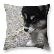Concern On The Face Of An Alusky Puppy Throw Pillow