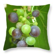 Concord Grapes On The Vine Throw Pillow