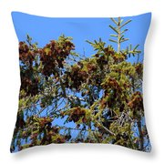 Cone Covered Throw Pillow