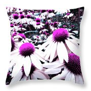Cone Flower Delight Throw Pillow by Kevyn Bashore