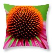 Coneflower Macro Throw Pillow
