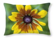 Coneflower - New England Wild Flower Throw Pillow