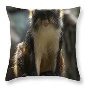 Congo Monkey1 Throw Pillow