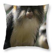 Congo Monkey2 Throw Pillow