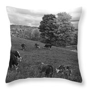 Congregating Cows. Jenne Farm Cow Reading Vermont Black And White Throw Pillow