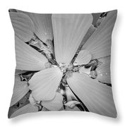 Conservatory Nature In Black And White 1 Throw Pillow