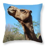 Contemptuous Camel Throw Pillow